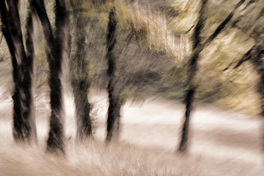 Trees Photograph - Passing By Trees by Carol Leigh