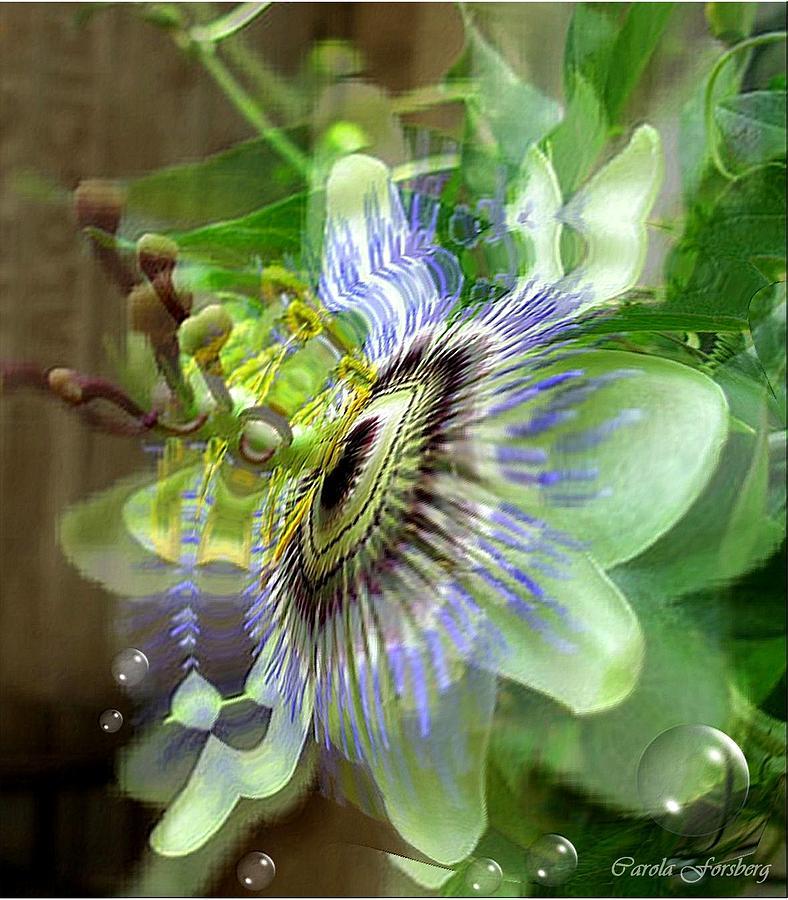 Flower Photograph - Passion by Carola Ann-Margret Forsberg