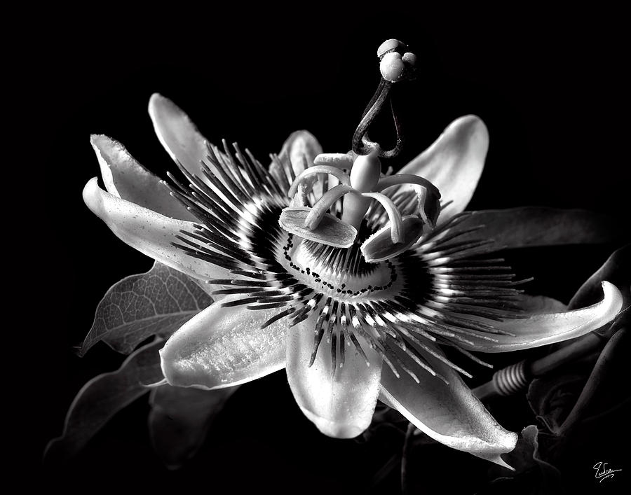 Flower Photograph - Passion Flower In Black And White by Endre Balogh