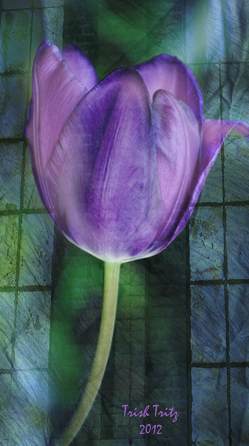Tulip Photograph - Passionate Purple by Trish Tritz