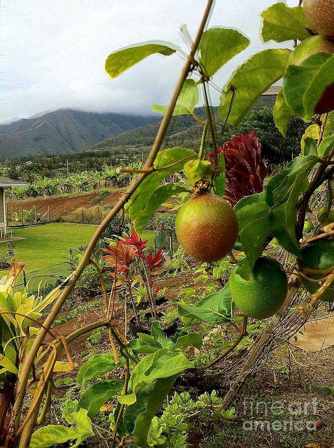 Landscape Photograph - Passionfruit On The Vine With A View Of The Valley   Maui by J R Stern