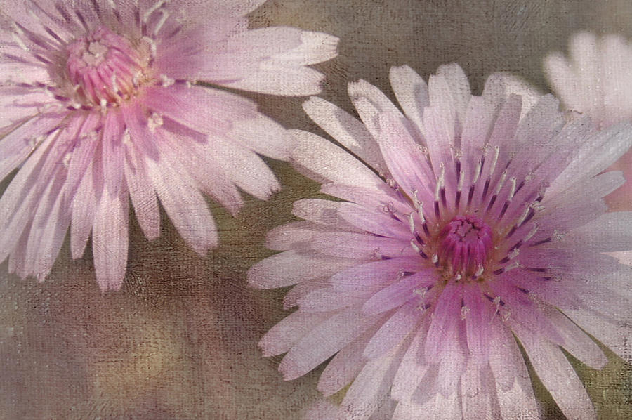 Pink Photograph - Pastel Pink Passion by Benanne Stiens