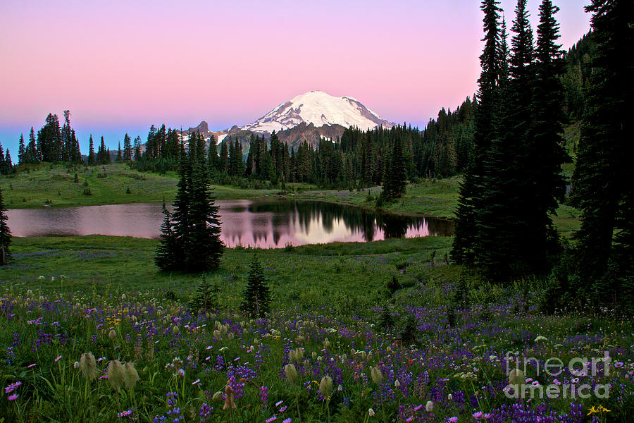 Indian Paintbrush Photograph - Pastel Skies Over Rainier by Marcus Angeline
