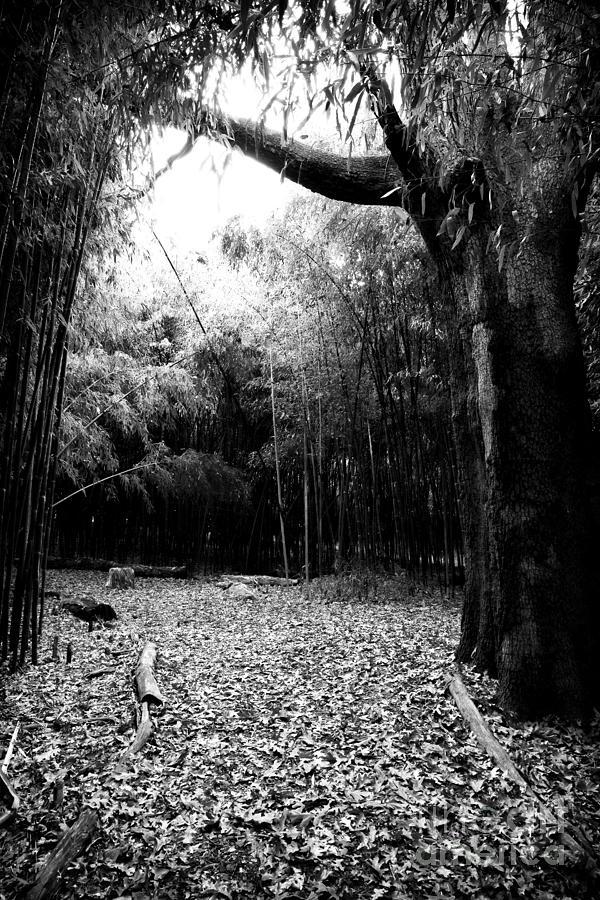 Path Photograph - Patch Of Light by John Rizzuto