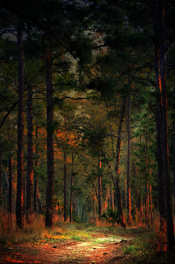 Path Photograph - Path On Fire by Emily Stauring