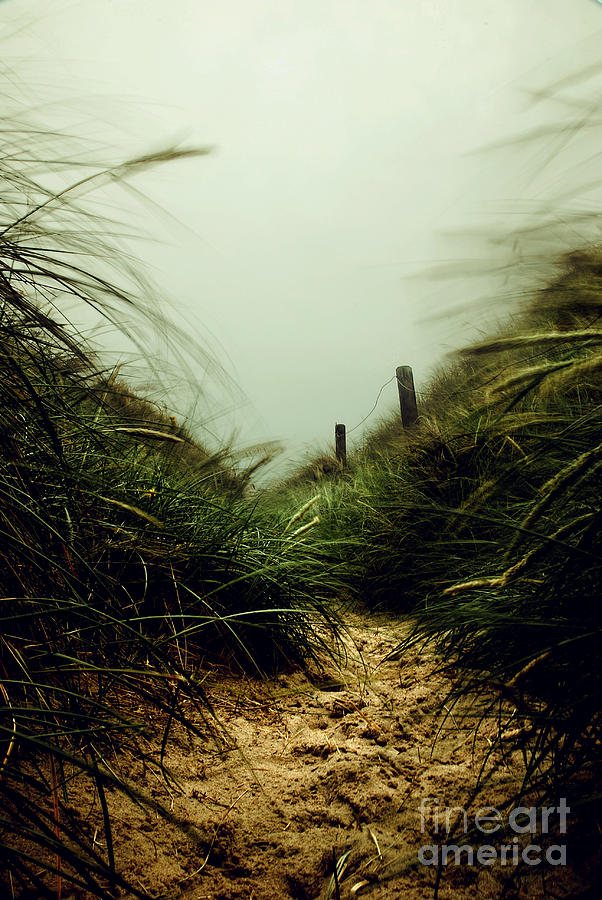 Seascape Photograph - Path Through The Dunes by Hannes Cmarits