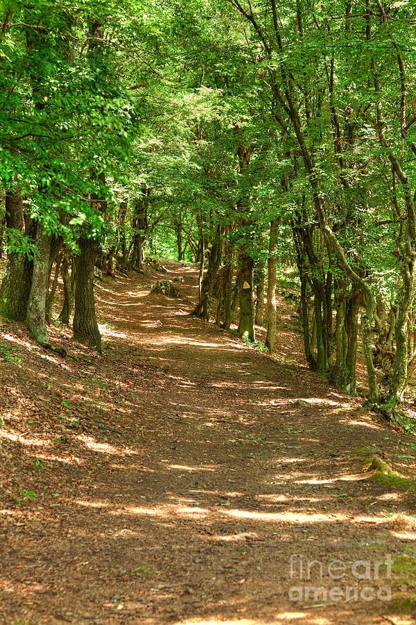 Path Photograph - Path To Ciucaru Mare Peak by Gabriela Insuratelu