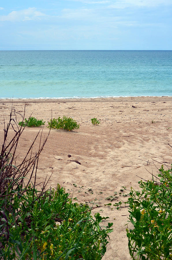 Beach Photograph - Pathway To The Beach by Sandi OReilly