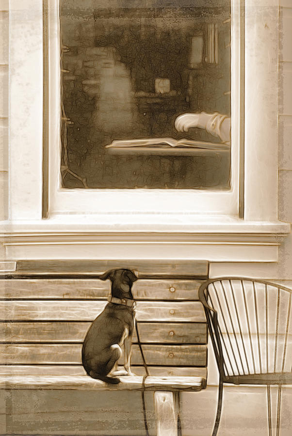Pup Photograph - Patiently Waiting by Rich Beer