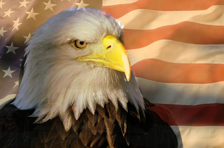 Eagle Photograph - Patriotic Eagle by Marty Koch