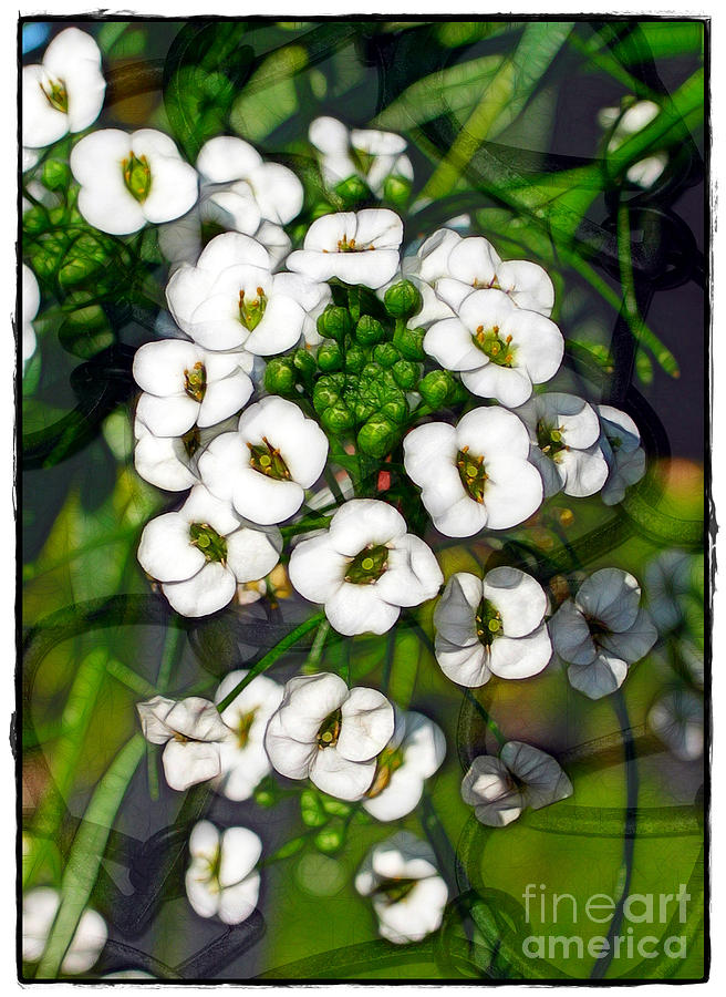 Flowers Photograph - Pattern In Green And White by Judi Bagwell