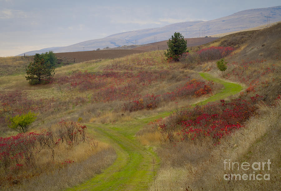 Idaho Photograph - Paved In Green by Idaho Scenic Images Linda Lantzy