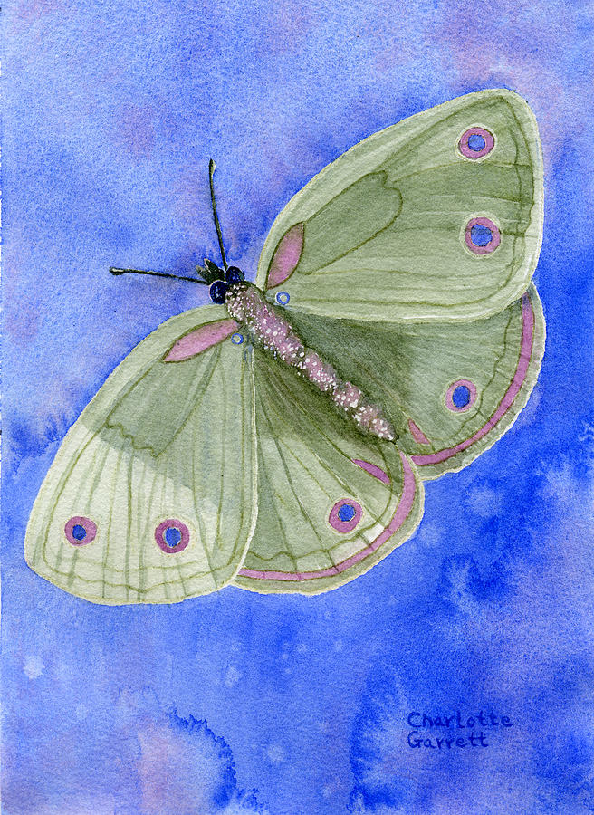 Peace Butterfly by Charlotte Garrett