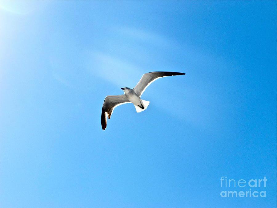 Bird Photograph - Peace by Heidi Horowitz