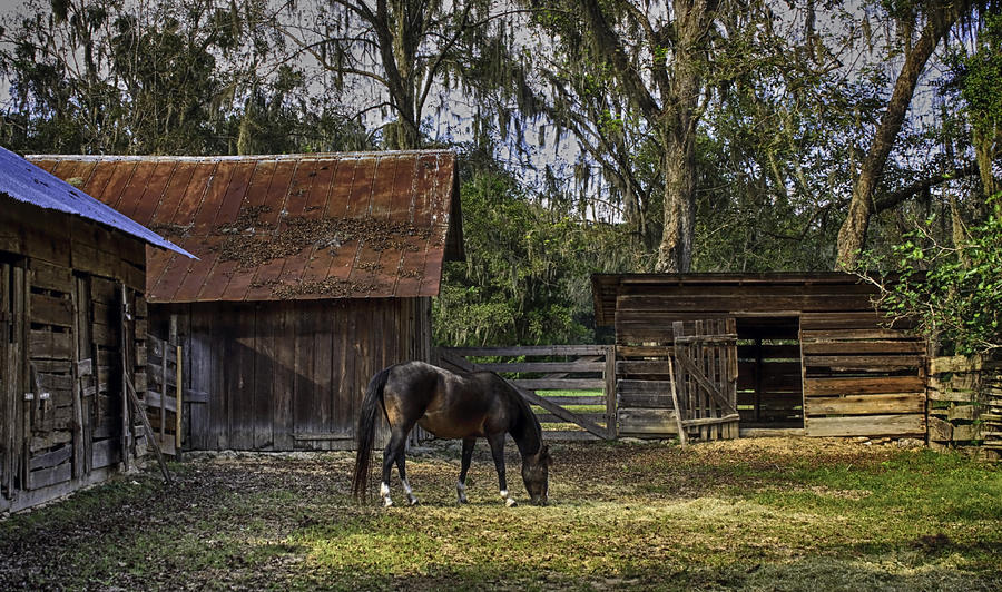 Horse Photograph - Peaceful Afternoon by Lynn Palmer