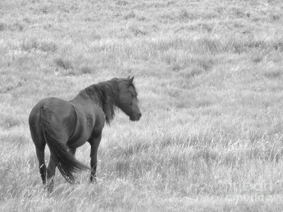 Black Horse Photograph - Peaceful Black Beauty Black And White by Donna Parlow