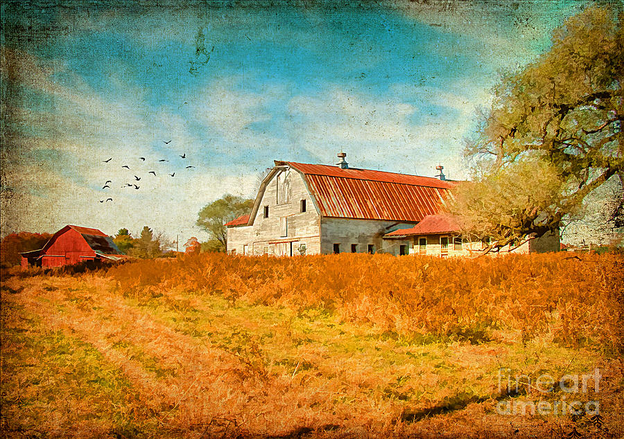Agriculture Photograph - Peaceful Days by Darren Fisher