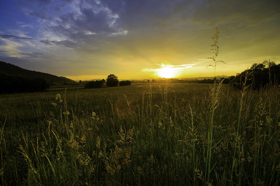 Peaceful Field Photograph By A B Whiteman