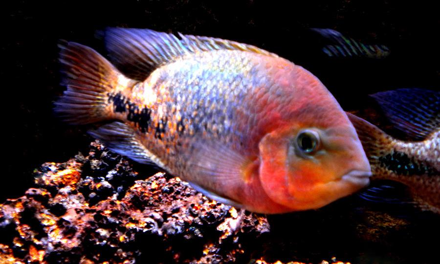 Colette Photograph - Peacefull Fish Swim  Around  In Denmark by Colette V Hera  Guggenheim