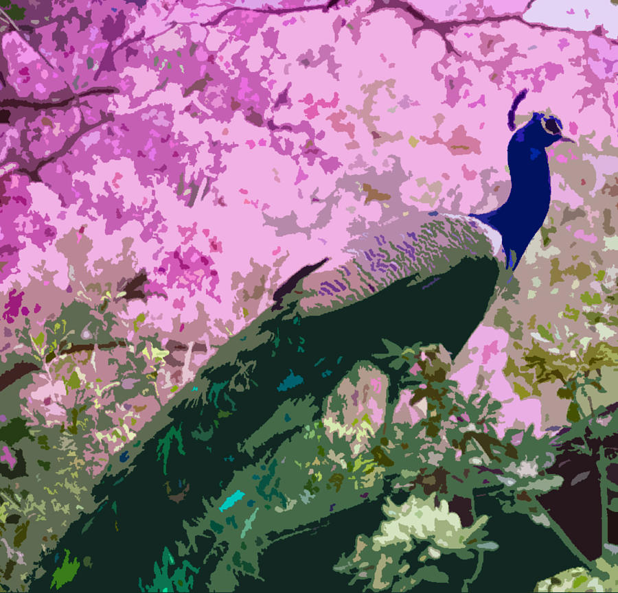 Peacock Cherry Blossoms Graphic Art Drawing - Peacock by Timothy Hart