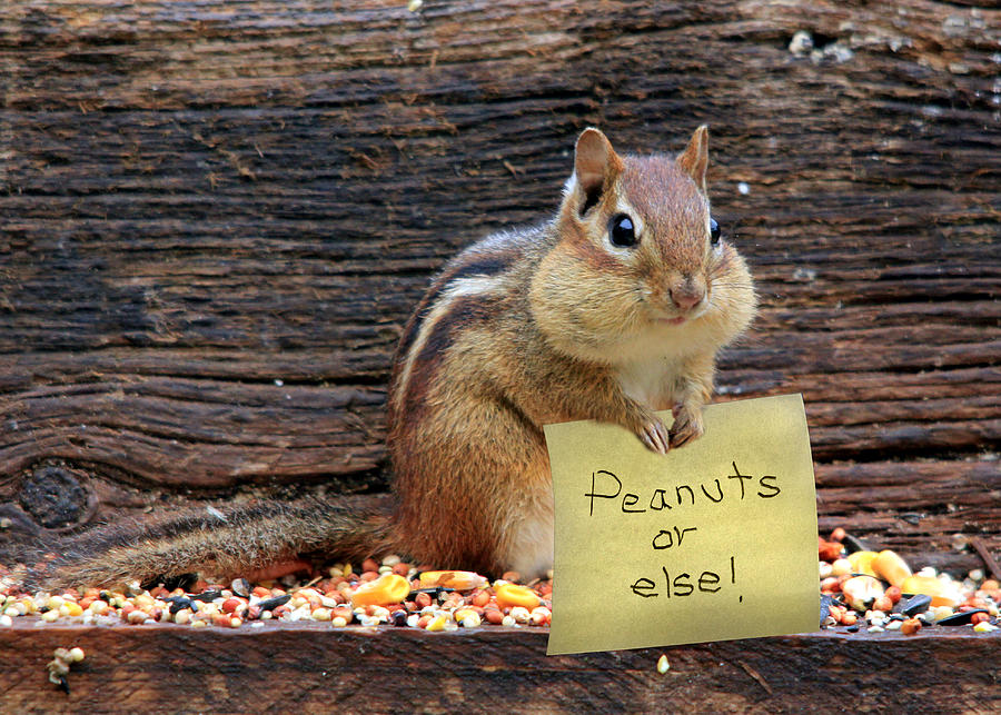Chippy Photograph - Peanuts Or Else by Lori Deiter