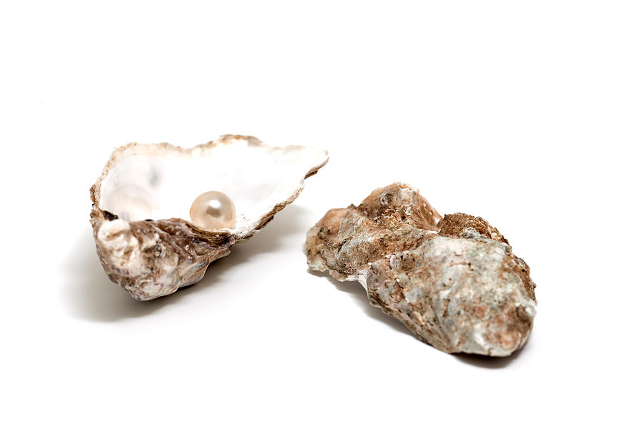 Horizontal Photograph - Pearl In Shell by Ursula Alter