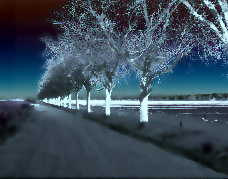 Trees Photograph - Pecan Trees by Jim Painter