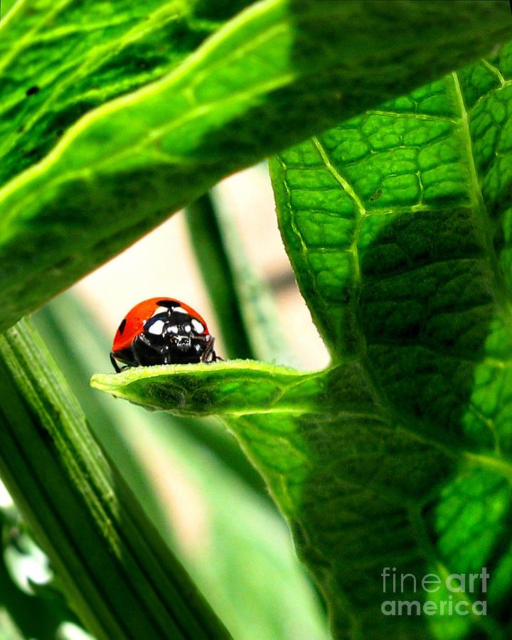 Ladybug Photograph - Peek A Boo by Jennie Breeze