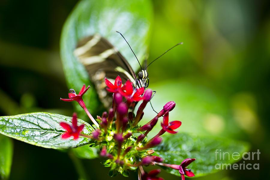 Butterfly Photograph - Peek-a-boo by Leslie Leda