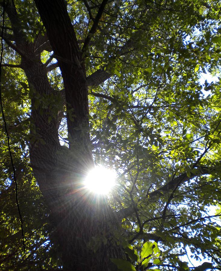Trees Photograph - Peek A Boo Sunshine by Renate Nadi Wesley