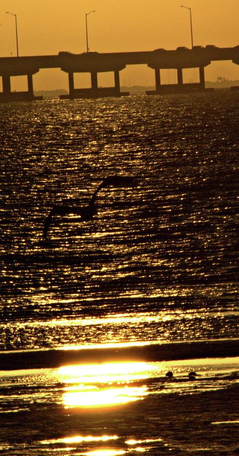 Pelican Photograph - Pelican In Flight Golden Sun by John Wright