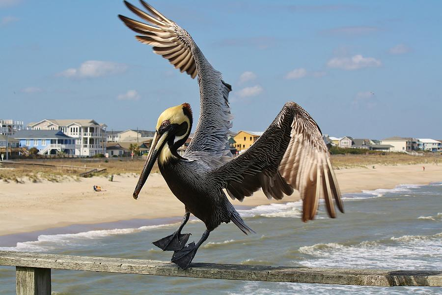 Pelican Photograph - Pelican Landing On The Pier by Paulette Thomas