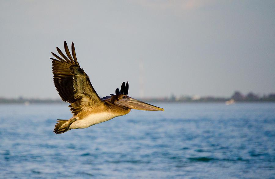 Sanibel Island Photograph - Pelican by Mike Rivera