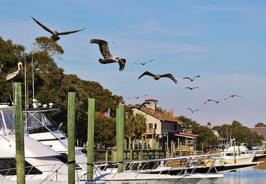 Pelican Photograph - Pelicans Abound by Paulette Thomas
