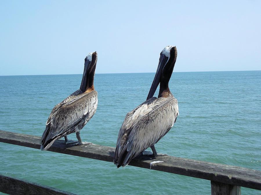 Pelicans Photograph - Pelicans On The Pier by Jennifer Stockman