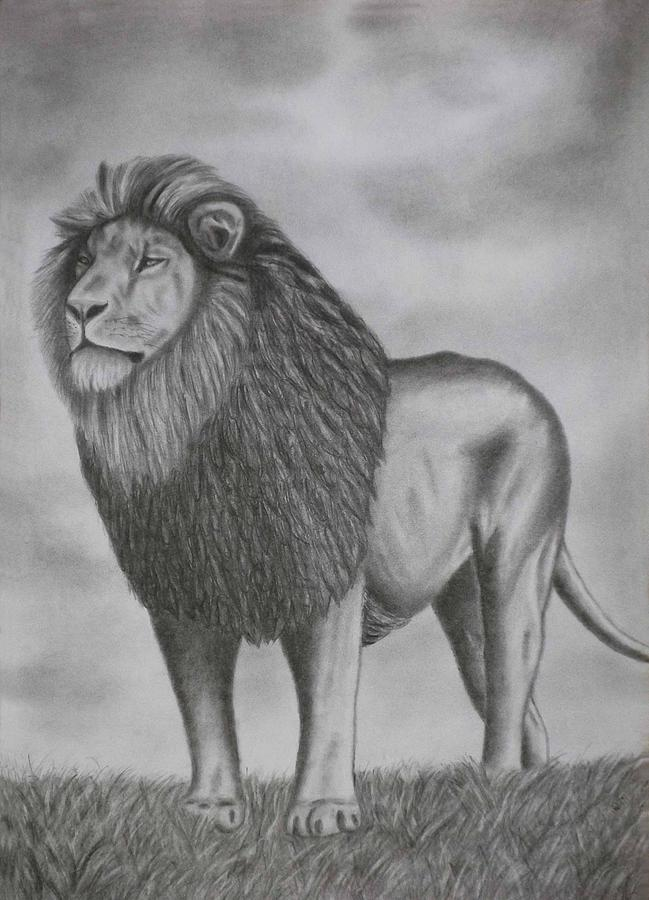Pencil Drawings A Lion Drawing by Luigi Carlo