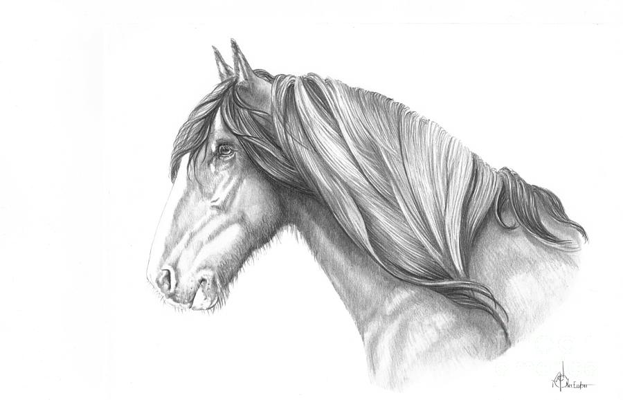 Pencil drawing pencil horse by murphy elliott