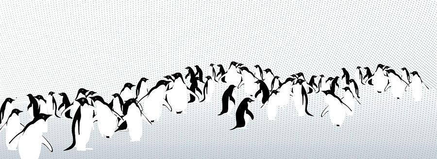 Horizontal Photograph - Penguins by Maya Shleifer
