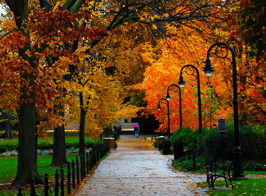 Penn State Paterno Libray Autumn Photograph by Chris Opall