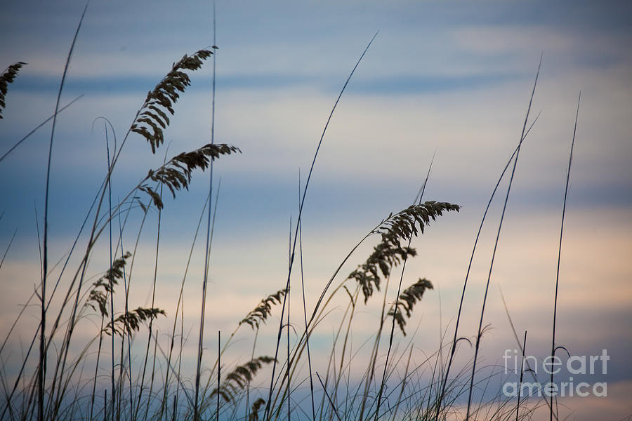 Gulf Coast Photograph - Pensacola Beach Sea Oats by Steven Gray