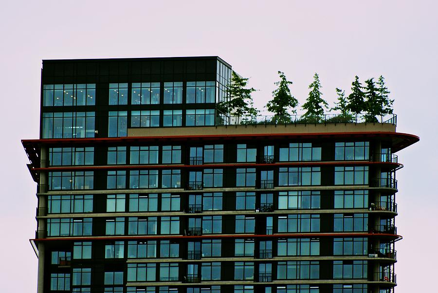 Penthouse Photograph - Penthouse Pines by Eric Tressler