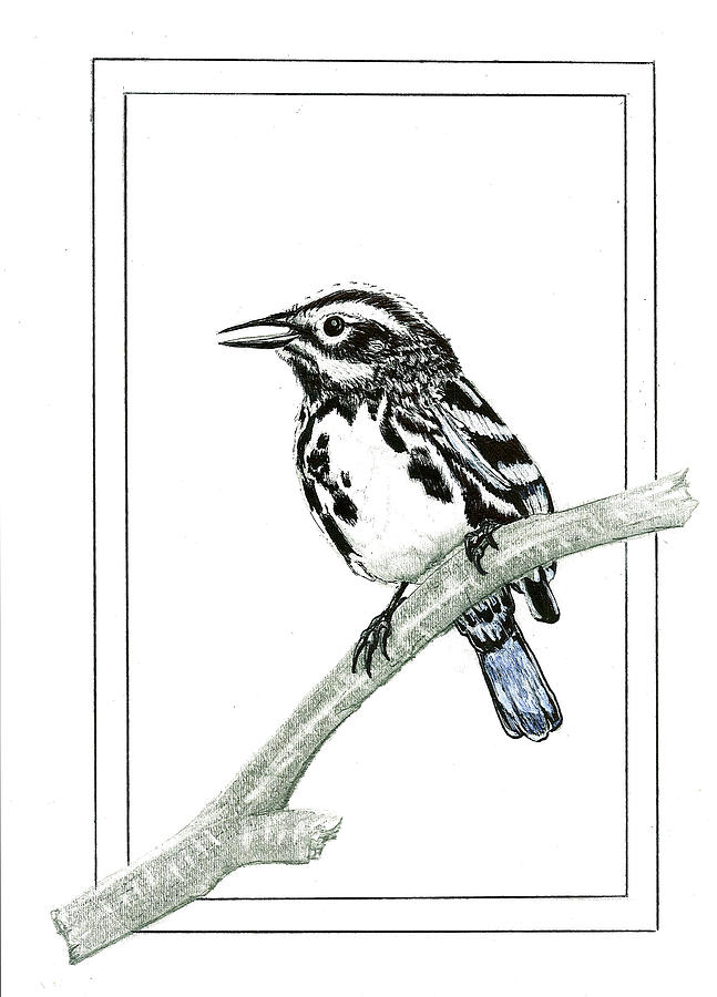 Perched Drawing by Harry Richards