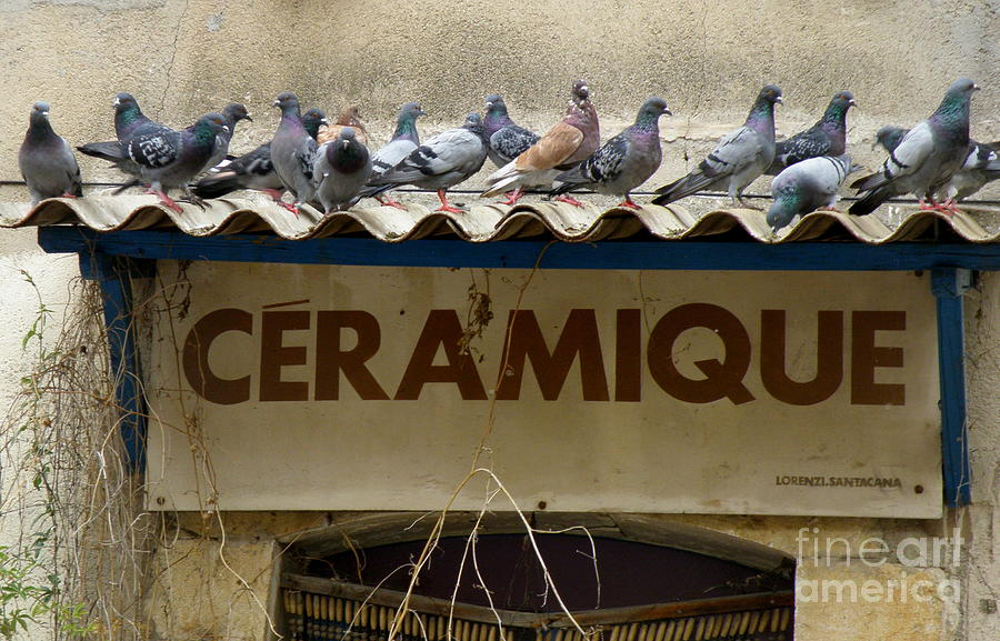 Sign Photograph - Perched Pigeons by Lainie Wrightson