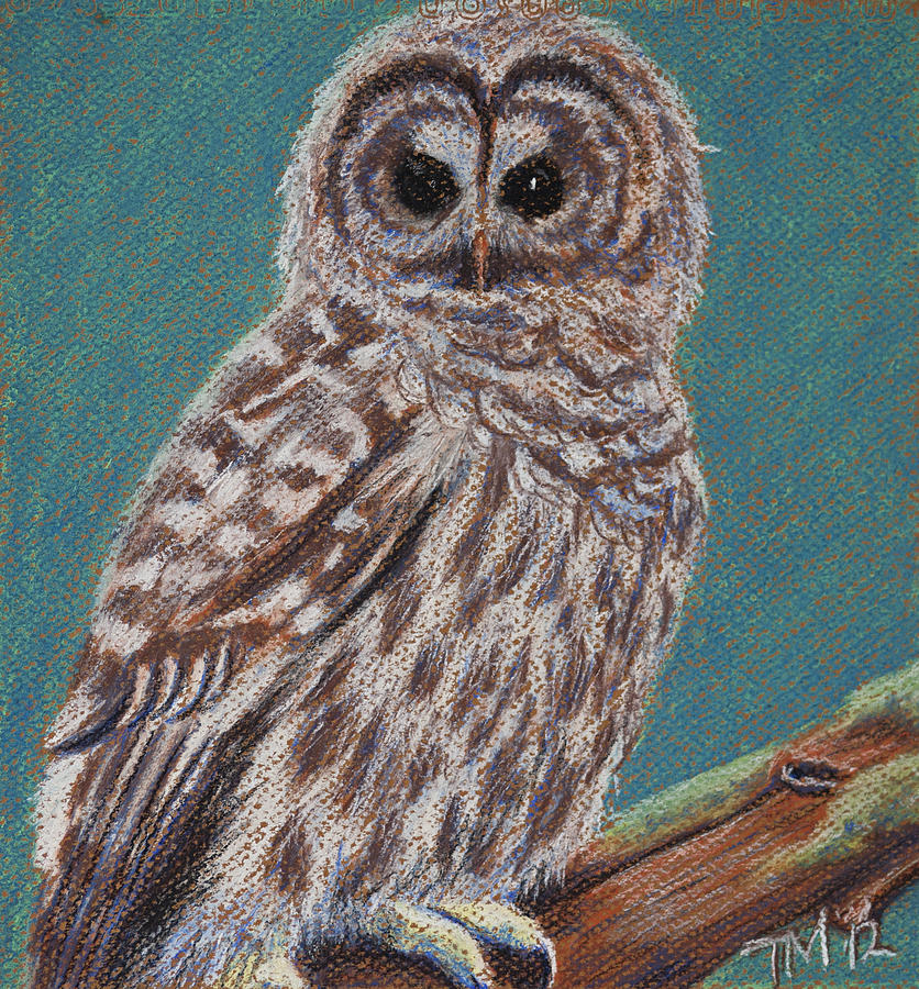 Owl Pastel - Perching Spotted Owl by Thomas Maynard