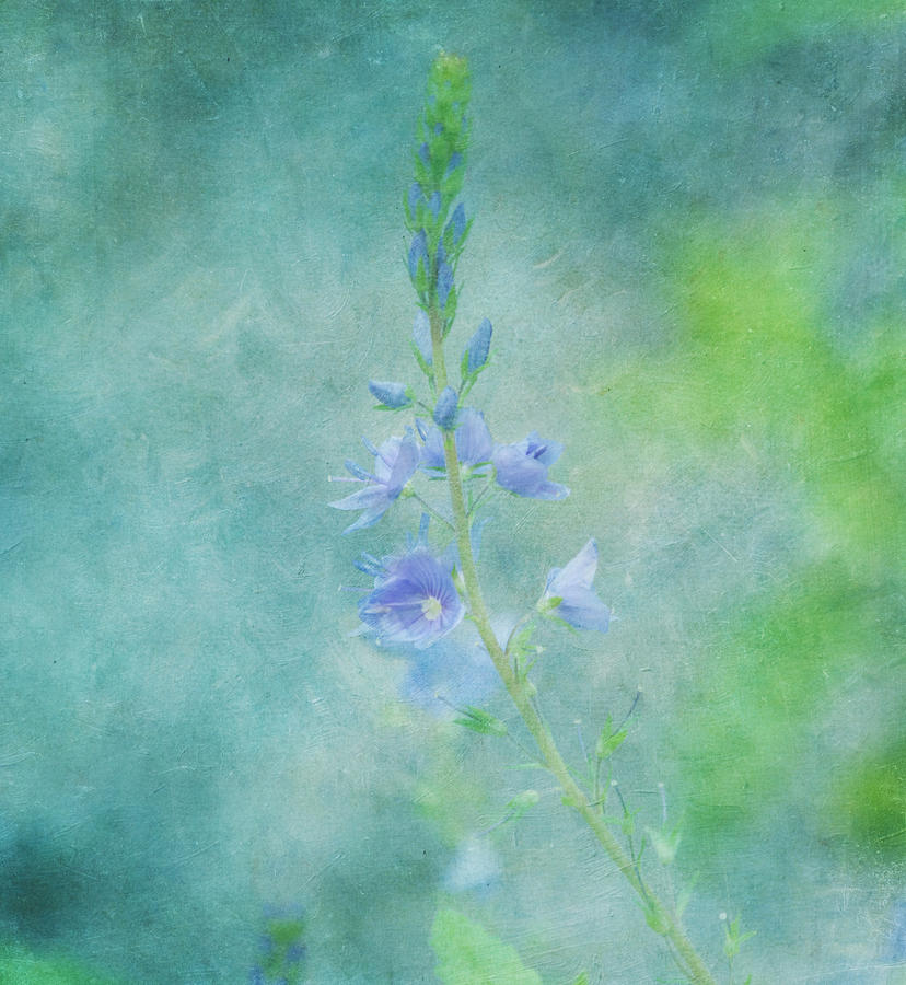 Purple Photograph - Perfect Dream by Kim Hojnacki