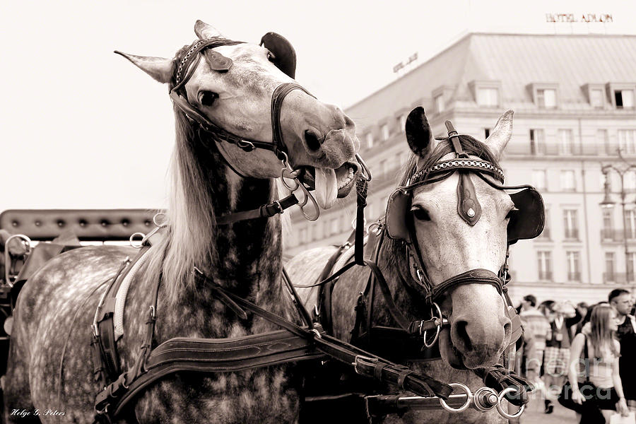 Horse Photograph - Performing Horses by Helge Peters