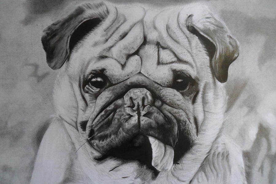 Perro Drawing - Perro by Luis Carlos A