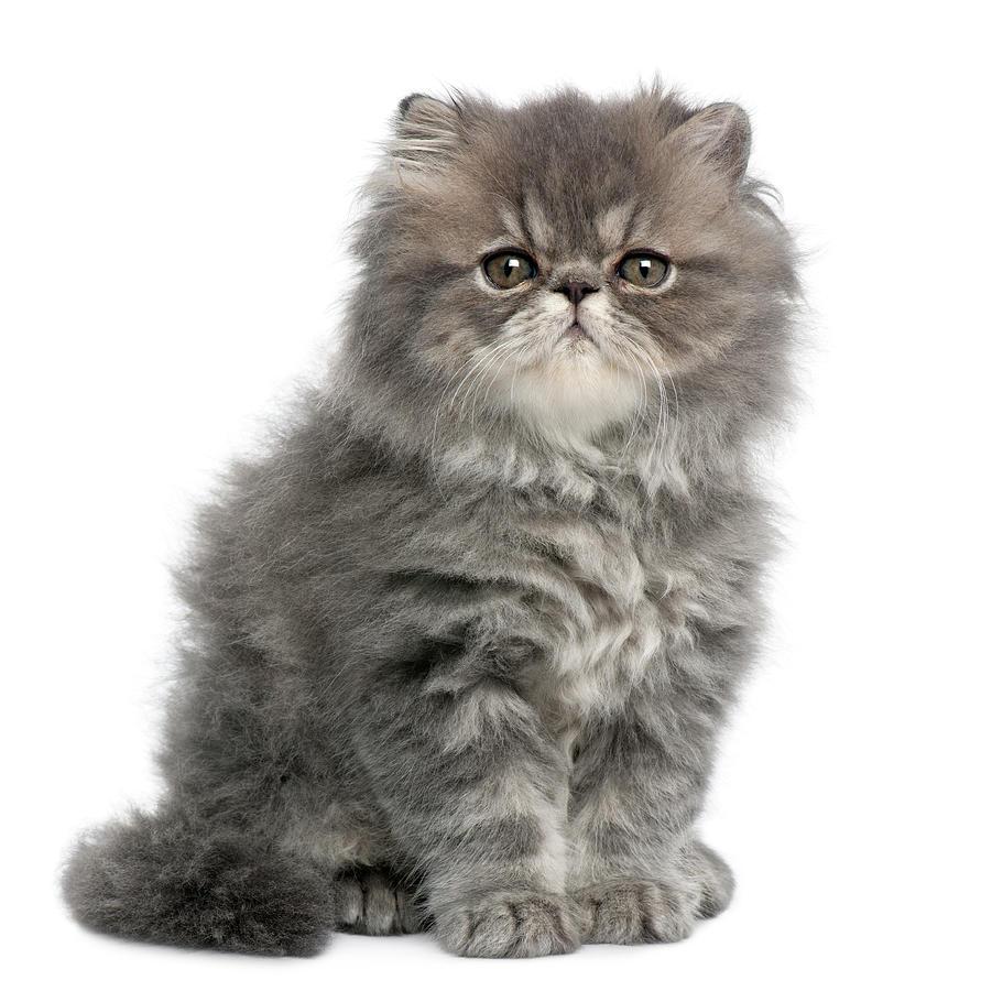 ten week old kitten