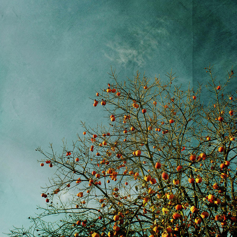 Square Photograph - Persimmon B O U N T Y by Paul Grand Image