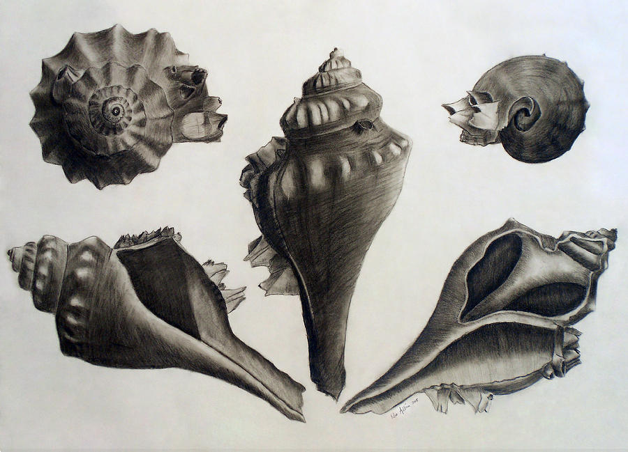 Perspectives Of A Shell